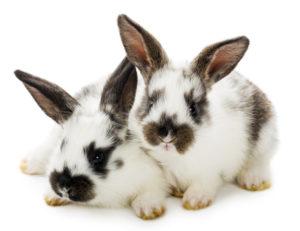 Kaninchenkäfig