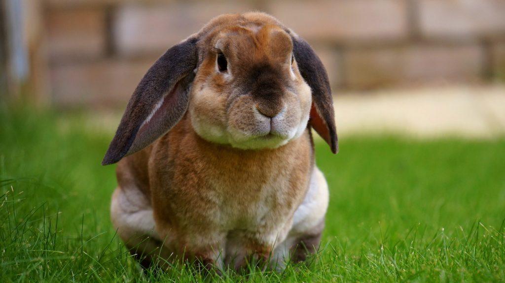 Futterbaum Kaninchen